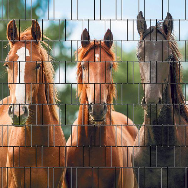 Sichtschutzstreifen bedruckt, Motiv Pferde