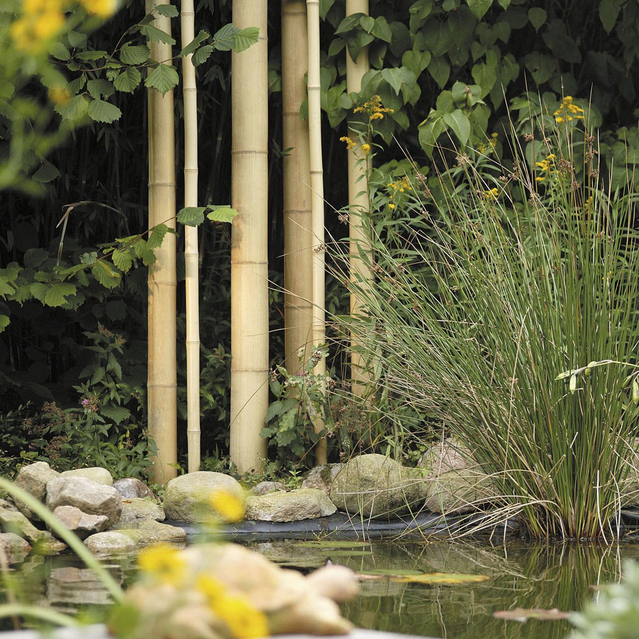 Bambusrohr lackiert Kyoto 180 cm Länge
