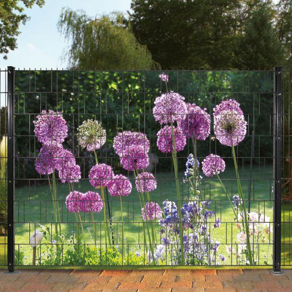 Sichtschutzstreifen bedruckt, Motiv Allium